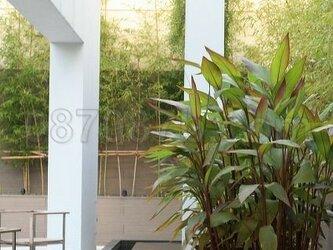 ★送料無料★緑の植物の写真「癒し」の画像