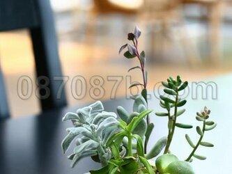 ★送料無料★緑の植物の写真「癒し空間」の画像