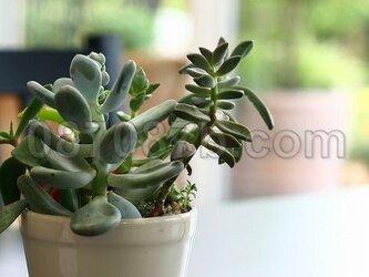 ★送料無料★緑の植物の写真「癒しほっこり」の画像