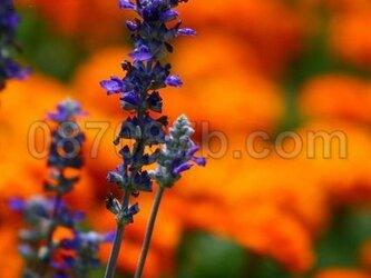 ★送料無料★オレンジのお花の写真「前進」の画像