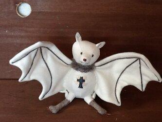 白い蝙蝠の画像