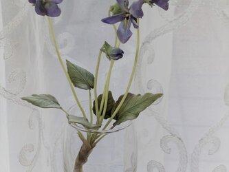 すみれ(青紫)根付きの画像