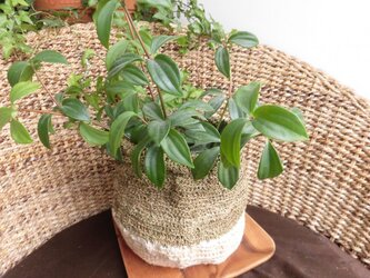 手紡ぎリネンの植木鉢カバー(143)の画像