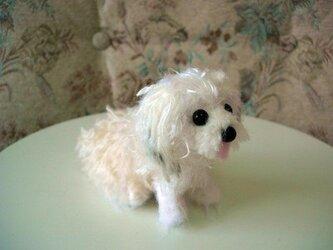 オーダーメイド犬あみぐるみの画像