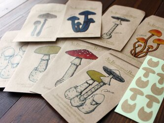 ●キノコ図鑑シリーズ2●アンティークキノコ図鑑のポチ袋の画像