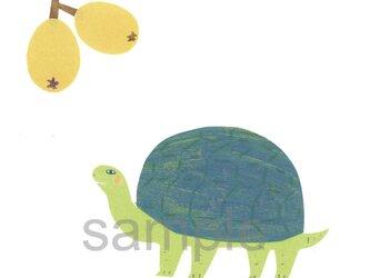 074「びわと亀」ポストカード選べる5枚セットの画像