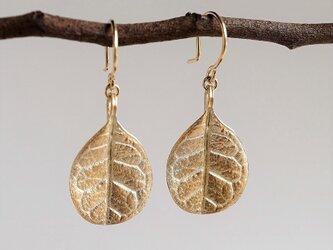 Feijoa leaf earrings (small) {EP052K10}の画像