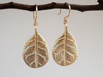 Feijoa leaf earrings (Medium) {EP051K10}の画像