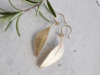 Elm leaf earrings [EP054K10]の画像