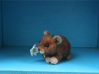 ナキウサギ(赤茶)の画像