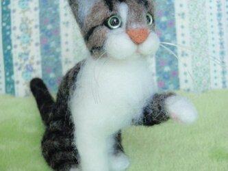 【オーダーメイド】羊毛猫*マスコット*Mサイズの画像