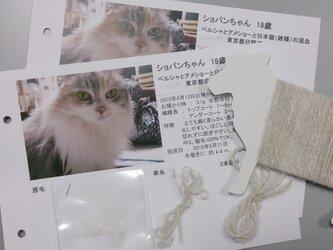 ペット毛糸 お試し紡ぎオーダーキットの画像