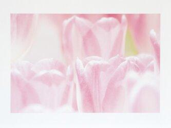 和紙でつづる花模様 ピンクのビタミン チューリップ(額無し)の画像
