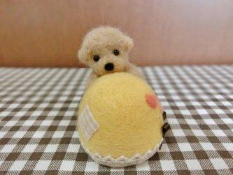 M様ご予約品 しがみつきトイプーちゃんのピンクッション(黄色)の画像