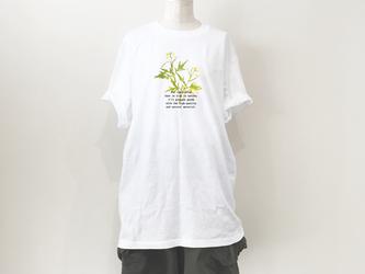 【送料無料】BigTシャツ押し花プリントT/ミズナの画像
