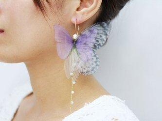 クリスマス Amethyst Fairy Dream Pearl ピアス(イヤリングへ変更可)の画像