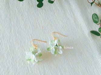 紫陽花のピアス グリーン系の画像