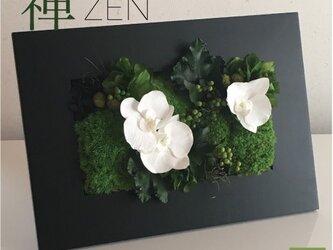 禅パネル・コチョウランと苔のプリザーブドフラワーパネルの画像