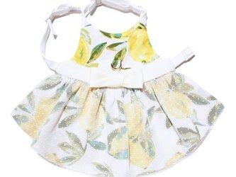 Jaune ete citron ROBE Quality Bunny Clothesの画像