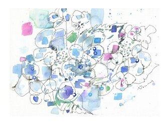 祈り(額紫陽花)の画像