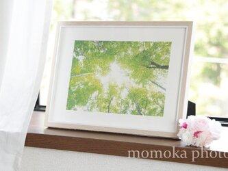 和紙でつづる光の森 癒しの風(額無し 裏打ちあり)の画像