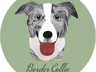 ボーダー コリー(ブルーマール)《犬種名ステッカー/中型犬》の画像