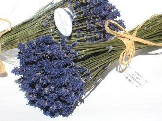 農薬不使用北海道産ラベンダースワッグ(ドライフラワー)の画像