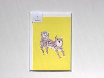 柴犬のレターセットの画像