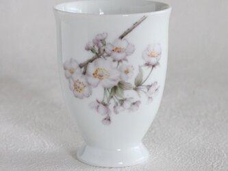 桜のカップの画像