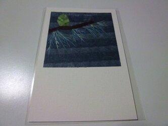 ヒマラヤスギの球果(ポストカード)の画像