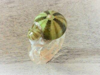 蓄光☆2つの小ウニの指輪の画像