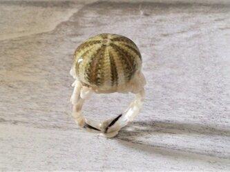 小ウニとサンゴのかけらの指輪の画像