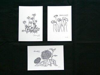 水無月の花の画像