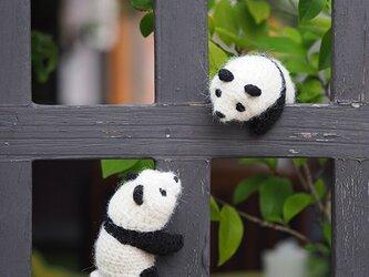 ころんころんパンダの画像