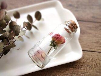 【展示のみ】植物標本 Botanical Collection■No.R-21 バラ ナタリーの画像