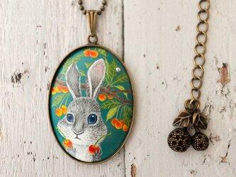 グレイウサギ、サクランボget!の画像