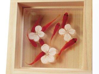 アクリル 金魚 アート 桧 「咲/あじさい」こだわりの純日本製  【プレゼント付き】【ラッピング無料】の画像