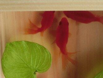 金魚アート 3D金魚  「扇」純日本製 流金 プレゼント 誕生日 結婚 退職 還暦 祝い 男性 女性 クリスマス ハート 桧 木の画像
