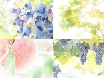 フルーツで運気アップ 桃 気軽に飾れる4枚組 プチサイズ額付きの画像