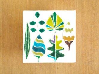 庭の葉っぱの標本 aの画像