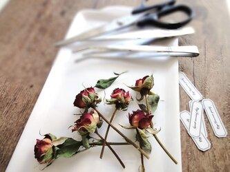 【展示のみ】植物標本 Botanical Collection■No.R-24 バラ サマーパーティーの画像