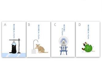 猫 ポストカード夏 *暑中見舞文字入り*4枚セット *冷やしてますよ〜♪*の画像