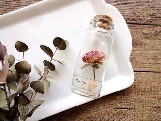 【展示のみ】植物標本 Botanical Collection■No.R-25 バラ メモリーレースの画像