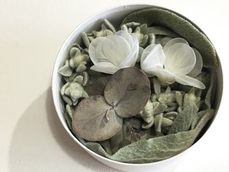 Quguriピアス「shells 羽白」の画像