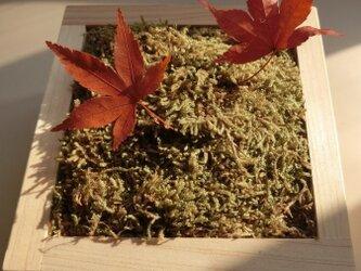 プリ盆 「苔×紅葉 」 プリザーブドフラワー 紅葉 苔 モスの画像