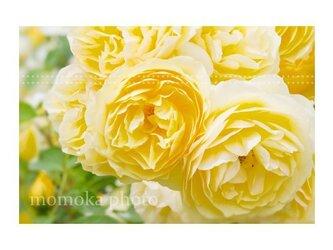 【すぴふぉと】TE-5 『 黄色い羽の天使に会いたい 』 〈はがきサイズ〉和紙印刷の画像