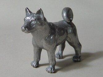 犬(W68)の画像