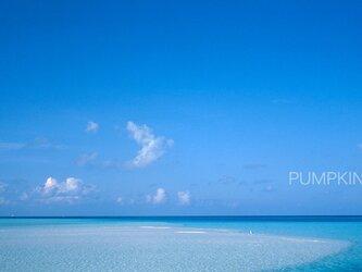 水平線と白鷺-Ⅱ  PH-A4-029    写真  水平線 モルジブ インド洋 南国 ブルーラグーン   白い砂 砂浜の画像