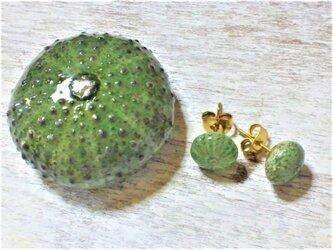 【sale】サージカルステンレス☆ウニの標本のピアス(緑)の画像