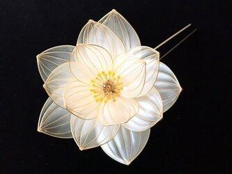 蓮かんざし:水の花-白蓮-の画像